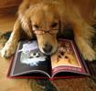 Thumbnail Dog: Expert Dog Trainer Secrets