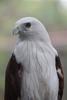 Thumbnail Waiting Eagle
