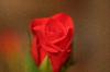 Thumbnail IMG 4178.JPG