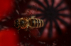 Thumbnail Biene auf Mohn 9531.JPG
